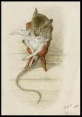 Mouseonchair